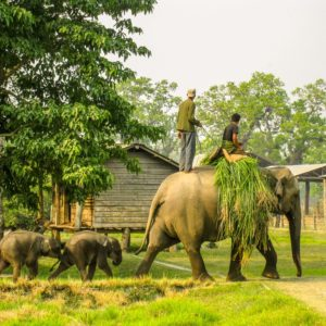 chitwan national park conservation