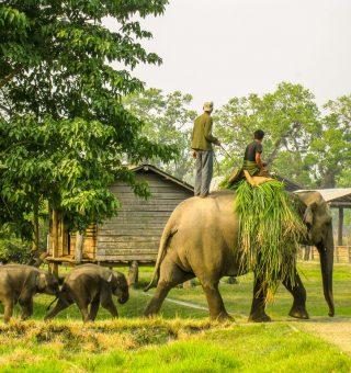 chitwan national park conservation