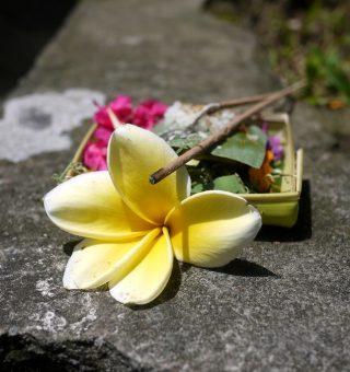 balinese-ritual-offering