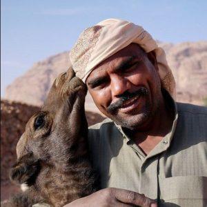 Baby camel in Wadi Rum Desert