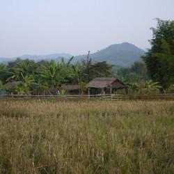 Rice Paddy in Hongsa, Laos