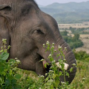 logging elephant trek laos