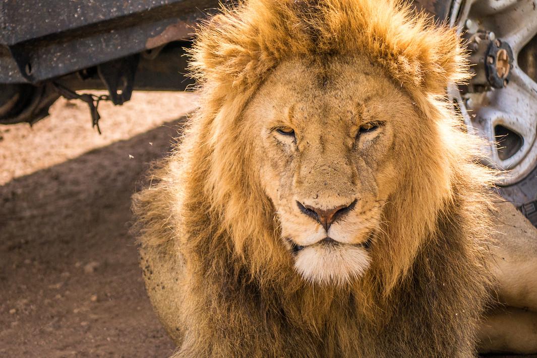 75+ Photos That Will Make You Want to Book a Safari to East Africa | A Little Adrift alittleadrift.com